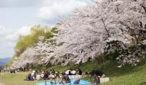日本樱花季卖得好的选品都在这里了,你准备了几种?